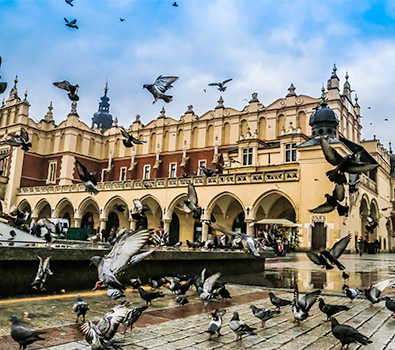 Lots of pigeons flying in front of a grand building in Krakow