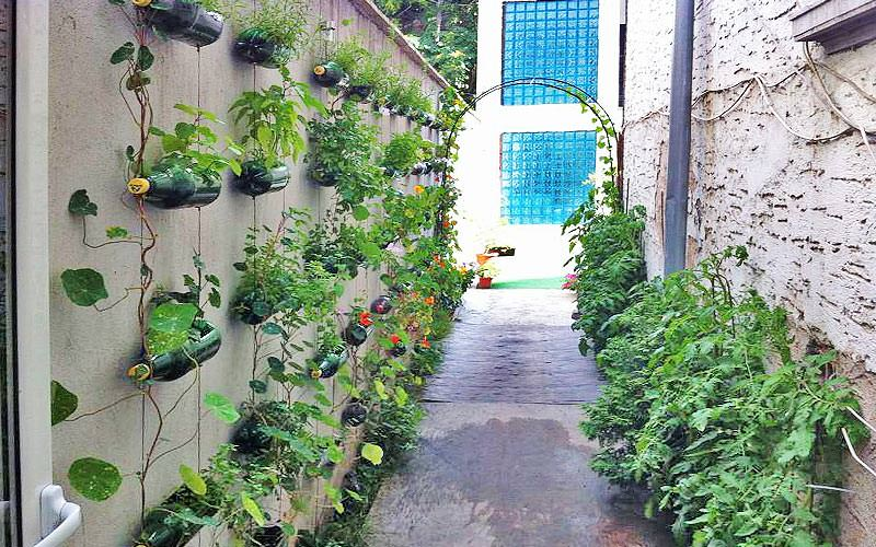 An outside alley lined with flowerpots