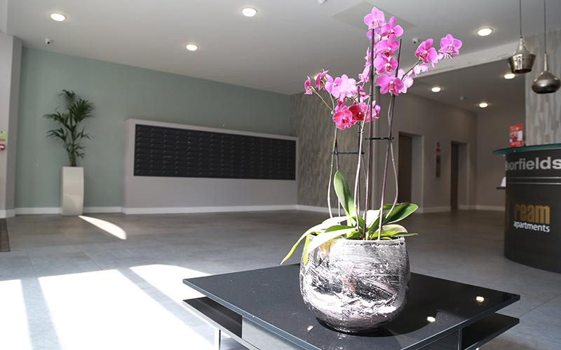 A reception area with a plant on a table