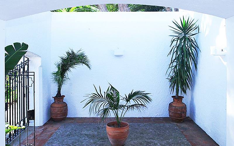 Three plants on a terrace