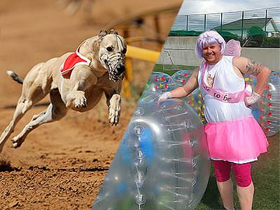 A split image of a greyhound running and a man dressed in a tutu next to an inflated zorb