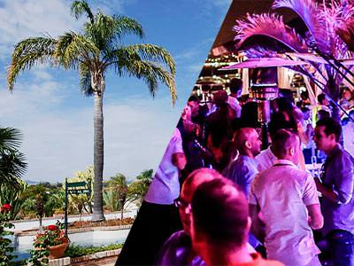 A split image of a palm tree and some people drinking on an outdoor beer terrace