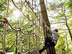 A man climbing an outdoor rope ladder to a backdrop of trees