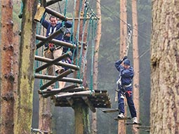 A person on a treetop assault course shot from ground level