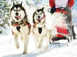 A pair of huskies pulling a sledge through snow