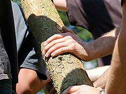 Close up of mens hands on a log