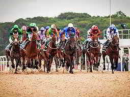 A large group of horses and jockeys racing on a dirt track