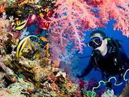 A man scuba diving near a coral reef