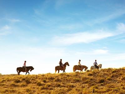 A line of horses are silhouetted against a blue sky
