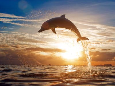 A dolphin jumping over the sea at sunset