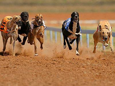 Five greyhounds racing side-by-side on a dirt track