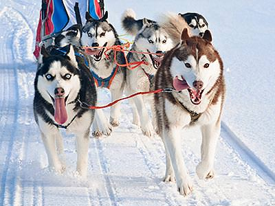 A group of huskies pulling a sled across white snow