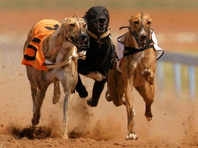 Three greyhounds racing