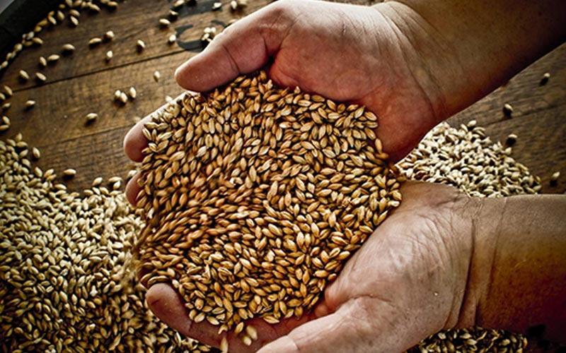 A close up of hands holding grain