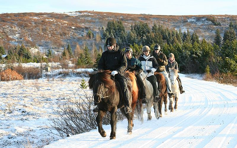 Five people riding horses outdoors in a line