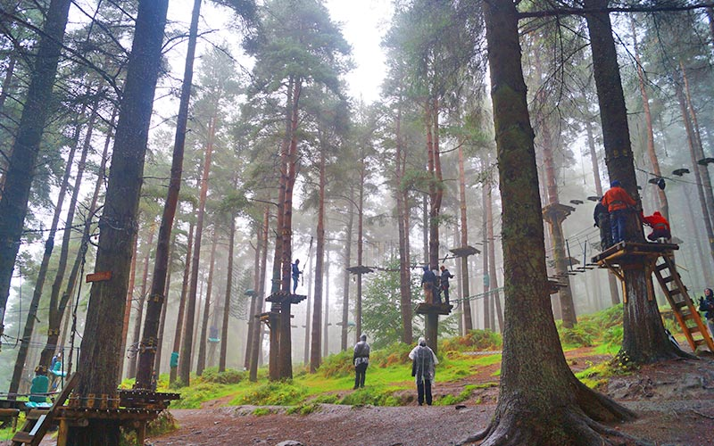 Lots of people taking part in a treetop assault course in a forest