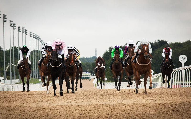 Image of Newcastle all weather racecourse, with group of horses heading towards the camera, with floodlights lining the track in the distance, in front of a grey sky.