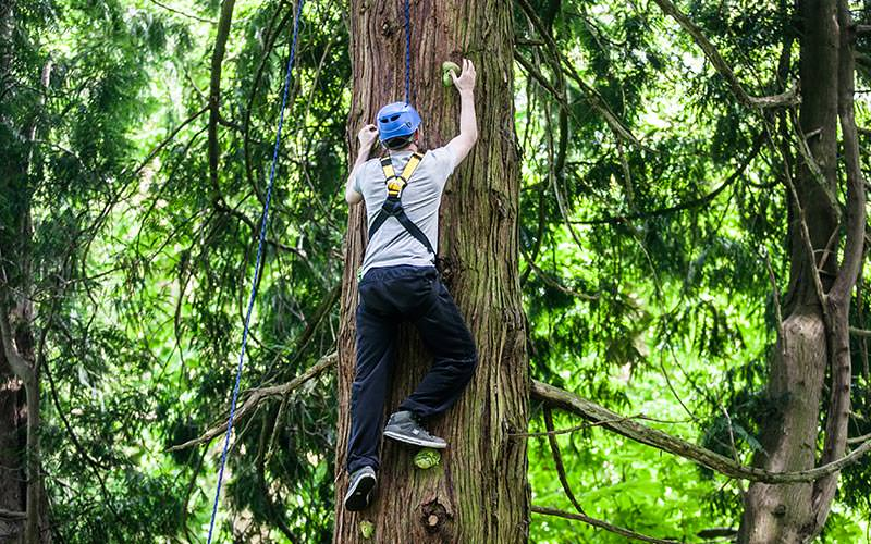 A man climbing a tree