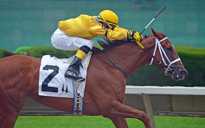 A horse with a number two written on, being rode by a jockey wearing yellow