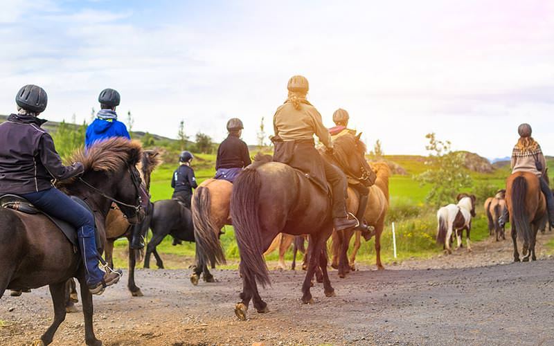 The back of people riding horses on a path with a field in the background