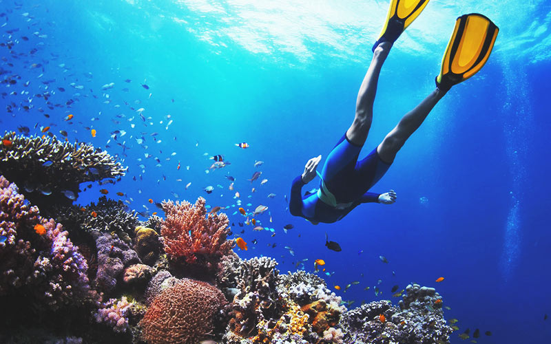 A person diving down to look at the fish under the sea