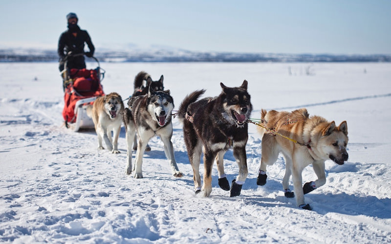 Someone getting pulled along the snow by husky dogs