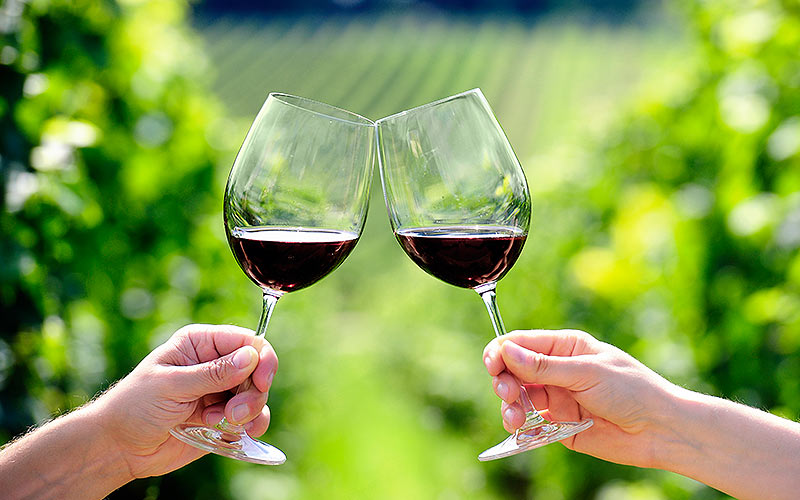 A close up of two people cheering with wine glasses, and a vineyard in the background