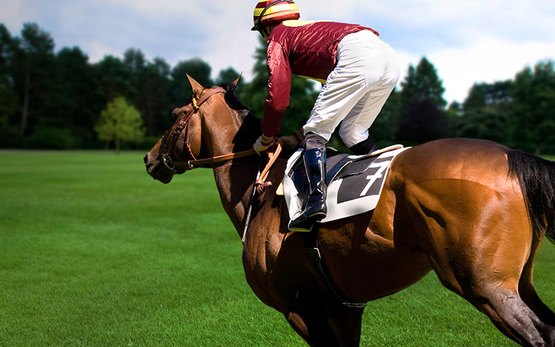 A jockey riding a horse in a field