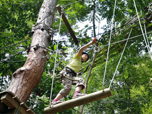 High Ropes Forest Adventure