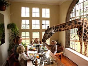 Giraffe sticking his head through an open window and eating from the table with a family sat around it enjoying breakfast