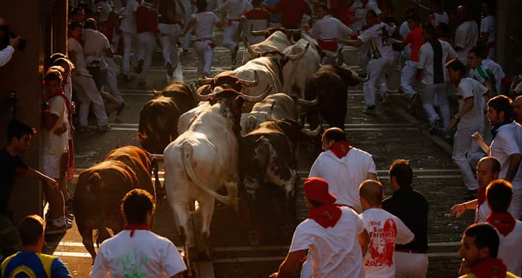 bull running in pamplona