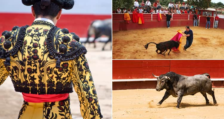 Three tiled images - featuring one of the back of a matador, one of a bull and one of a man fighting a bull