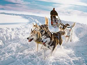 Huskies pulling a sleigh through the snow