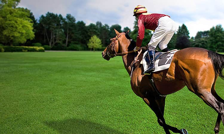 Jockey riding a horse in a plush, green field with a backdrop of trees