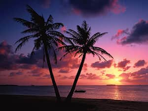 Two silhouettes of palm trees behind a gorgeous sunset on the beach
