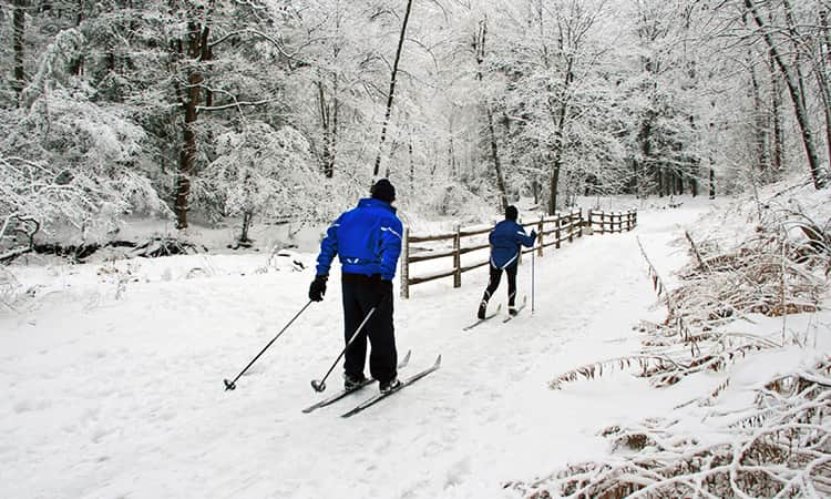 Two men skiing along a path in the forest.
