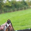 A gun after being shot