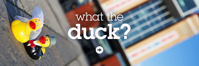 Bride & Groom rubber ducks explore Newcastle