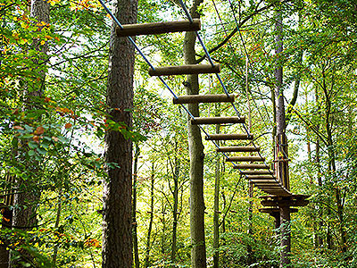 A rope ladder between two trees in a dense forest